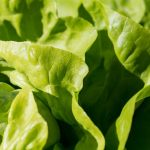 wlasciwosci salaty