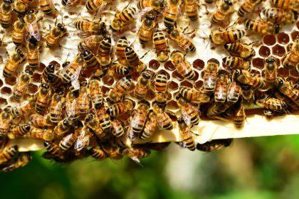 dzien pszczoly